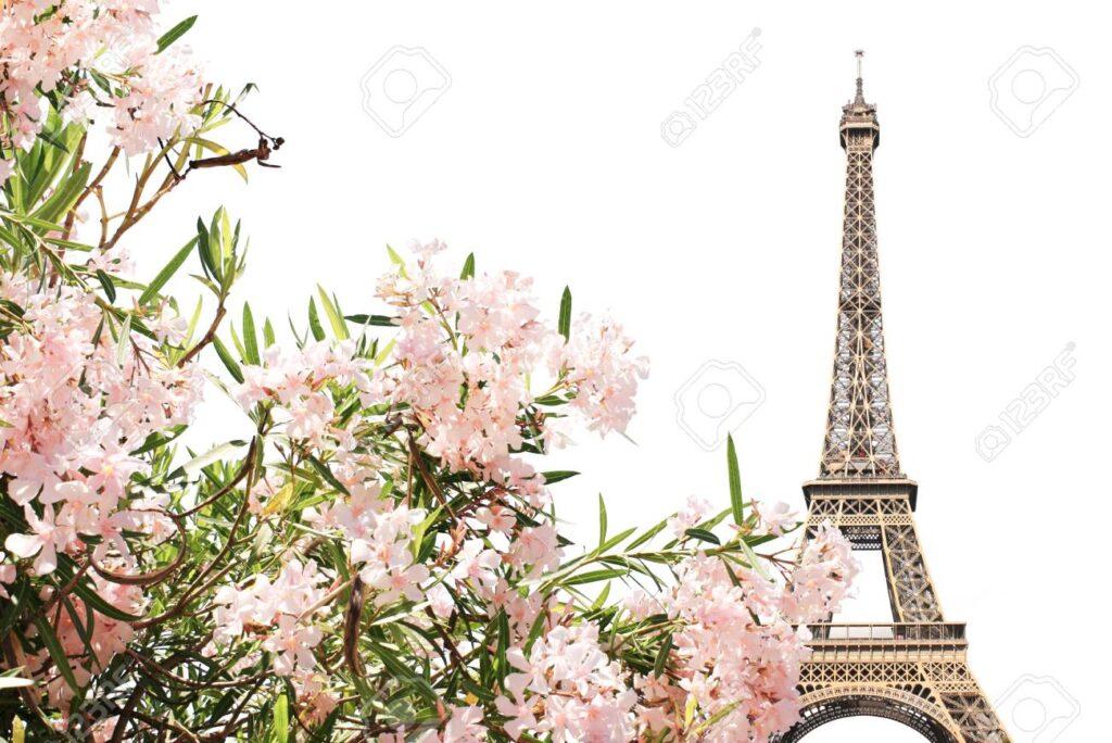 Eyfel Kulesi ve Pembe Bahar Çiçekleri